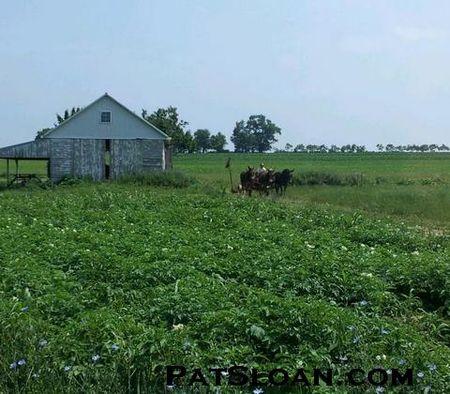 Pat sloan june amish farm