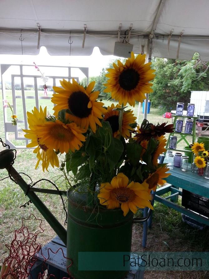Pat Sloan Sunflowers
