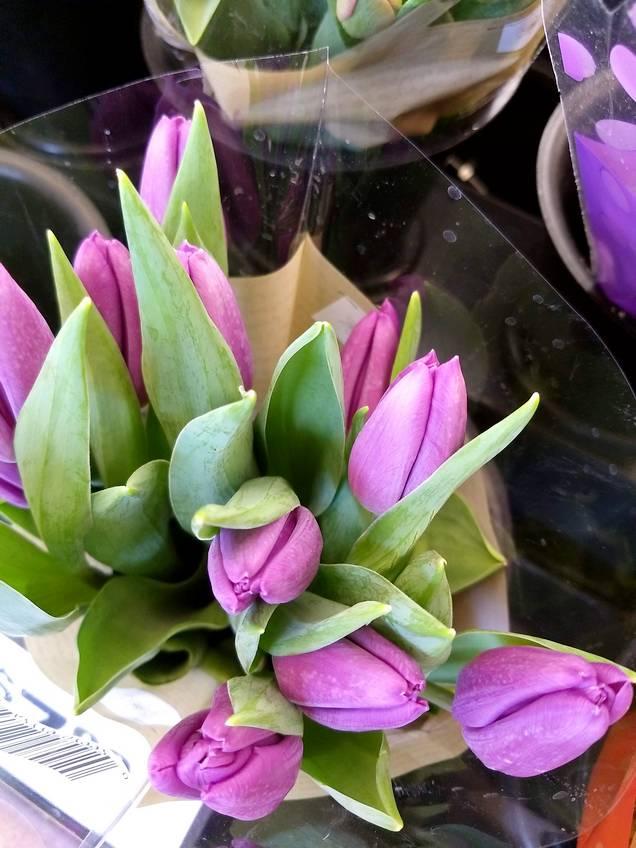 Pat sloan tulip bundle